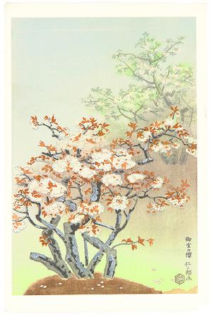 Ito Nisaburo: Cherry Blossom at Omuro - Artelino