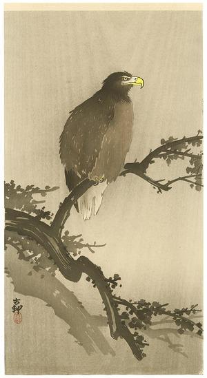 小原古邨: Eagle on Tree - Artelino