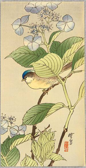 無款: Blue Bird on a Blossoming Branch - Artelino