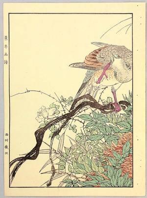 Imao Keinen: Nest of Mountain Pigeon - Keinen Gafu - Artelino