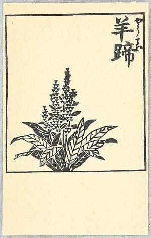 Hiratsuka Unichi: Flowering Plant - Artelino