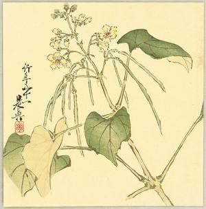 柴田是眞: Summer Flower - Artelino