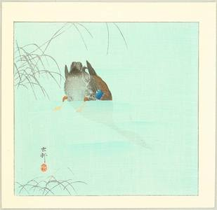 小原古邨: Diving Mallard (blue version) - Artelino
