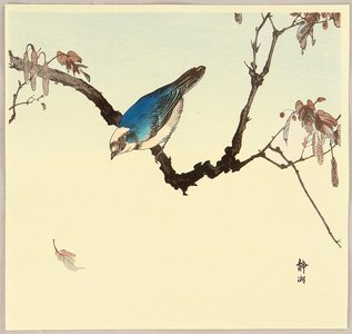 静湖: Blue Bird - Artelino
