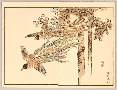 Kono Bairei: Paradise Bird - Artelino