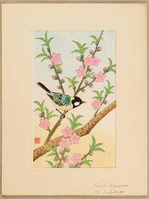 Ashikaga Shizuo: Peach Blossoms and Small Bird - Artelino