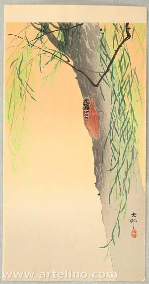 小原古邨: Cicada on a willow tree - Artelino