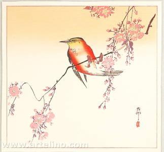 Ohara Koson: Orange Bird and Cherry Blossoms - Artelino