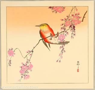 Ohara Koson: Red Bird and Cherry Blossoms - Artelino