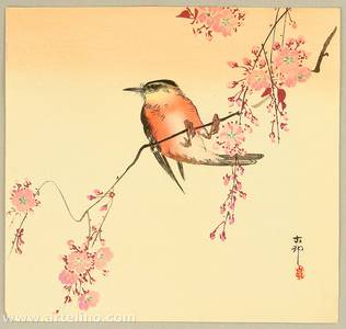 Ohara Koson: Orange Bird and Cherry Blossoms - Artelino
