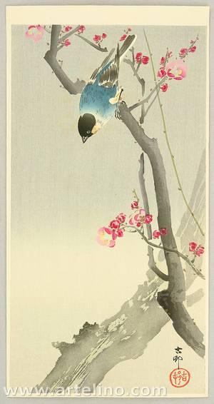 Ohara Koson: Bullfinch on Plum Tree - Artelino