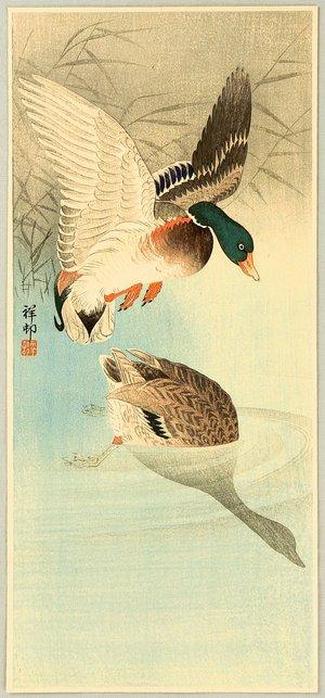 Ohara Koson: Two Mallard Ducks in a Pond - Artelino