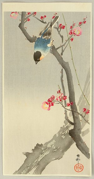 小原古邨: Blue Bird on a Plum Tree - Artelino