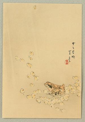 Watanabe Seitei: Frog and Cherry Blossoms - Artelino