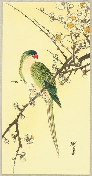 Kawanabe Gyosui: Parrot and Plum - Artelino