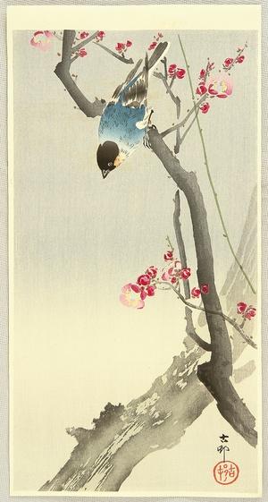 Ohara Koson: Blue Bird on a Plum Tree - Artelino