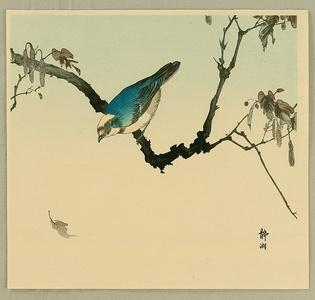 静湖: Blue Bird - Artelino
