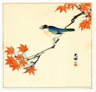 Iijima Koga: Bird and Maple Tree - Artelino