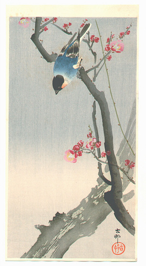 Ohara Koson: Blue Bird on a Plum Tree - Artelino
