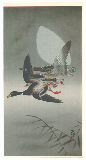 小原古邨: Two Mallards - Artelino