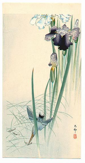 Ohara Koson: Iris and Kingfisher - Artelino