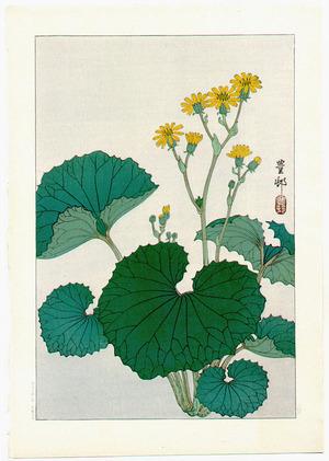 小原古邨: Liqularia (Muller Collection) - Artelino