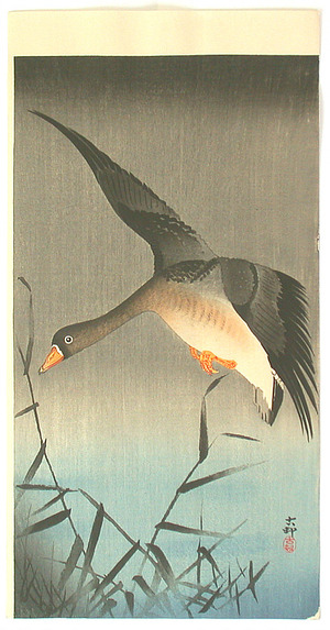小原古邨: White-fronted Goose (Muller Collection) - Artelino