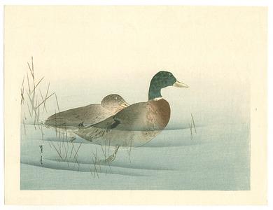 Watanabe Seitei: Two Mallard Ducks (Muller Collection) - Artelino