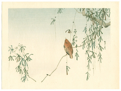 Watanabe Seitei: Sparrow on Willow Tree (Muller Collection) - Artelino