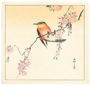 Ohara Koson: Red Bird and Cherry Blossoms - Artelino