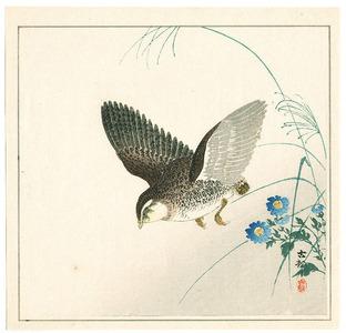 小原古邨: Quail and Blue Flowers - Artelino
