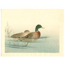 Watanabe Seitei: Two Mallard Ducks - Artelino