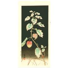 Jo: Lantern Plant at Night - Artelino
