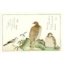喜多川歌麿: Pheasant and Wagtail - Artelino