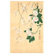 酒井抱一: Camellia and Cherry - Rimpa School Series - Artelino