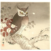 Takahashi Biho: Owl and Cherry Blossoms - Artelino