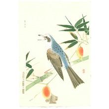 Fukuda Suiko: Brown-eared Bulbul - Artelino