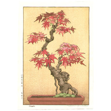 Yoshida Tsukasa: Bonsai Maple - Artelino