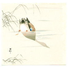 小原古邨: Diving Mallard (light color version) - Artelino