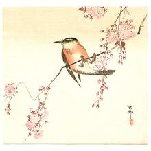 小原古邨: Orange Bird and Cherry Blossom - Artelino