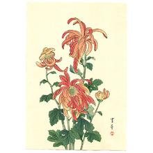 Watanabe Seitei: Red Chrysanthemums - Artelino