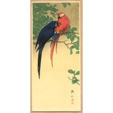 Ito Sozan: Blue and Red Macaws - Artelino