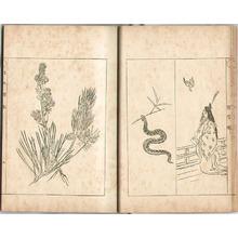Ogata Gekko: Sketches by Gekko - Irohabiki Gekko Manga Vol.5 (e-hon: First Edition) - Artelino