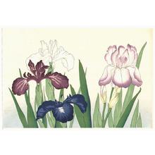 Unknown: Irises - Artelino