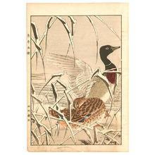 Imao Keinen: Mallard Ducks - Keinen Gafu - Artelino