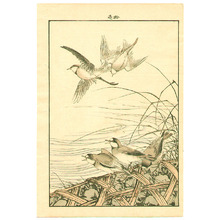 今尾景年: Five Plovers - Artelino