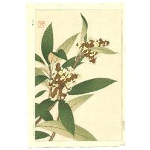 Kawarazaki Shodo: Loquat - Artelino