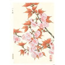 Ito Nisaburo: Double Cherry Blossoms - Artelino