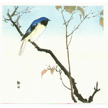 静湖: Blue Bird on a Branch - Artelino