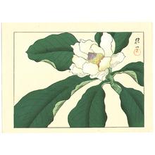 酒井抱一: Magnolia - Artelino
